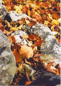 Stones and leaves, fall