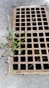 Weeds and Grid