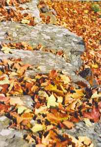 stonewall and leaves 2