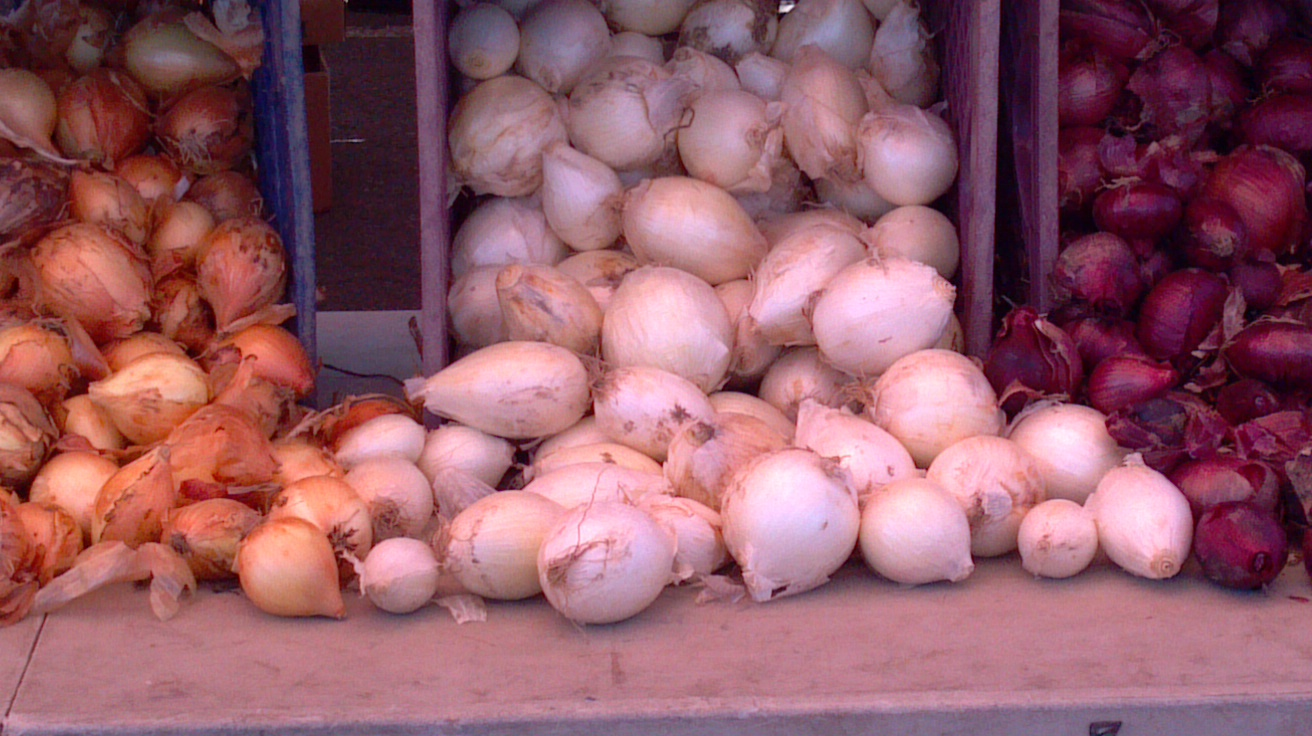onions-on-display
