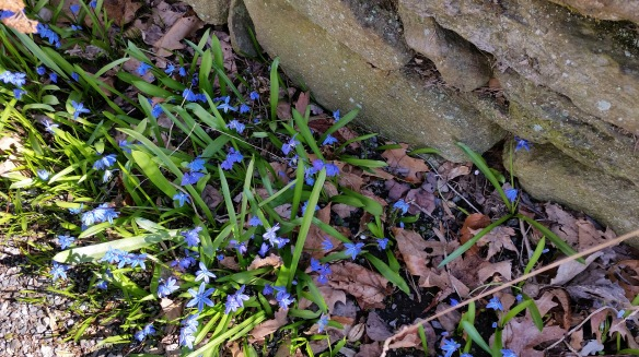 Blue flowers and stone wall