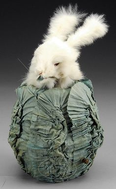 Rabbit in Cabbage 2