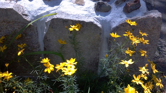 Rocks and Flowers with Shadows