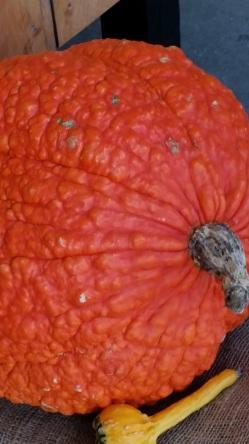 Orange squash 2