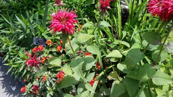 Bridge of flowers Bee Balm