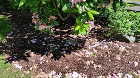 As above so below, pink flowers